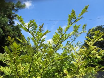 青空と樹葉