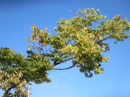山梨、紅葉初めの樹葉と青空