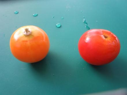 トマトとほおずき