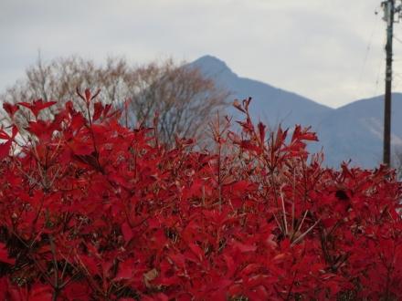 吾妻山を望む