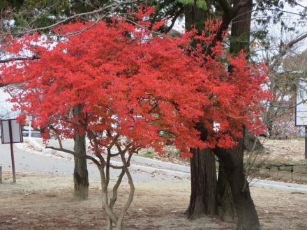 信夫山の紅葉の小木