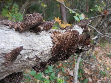 信夫山の木のきのこ