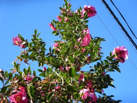 青空に赤い花