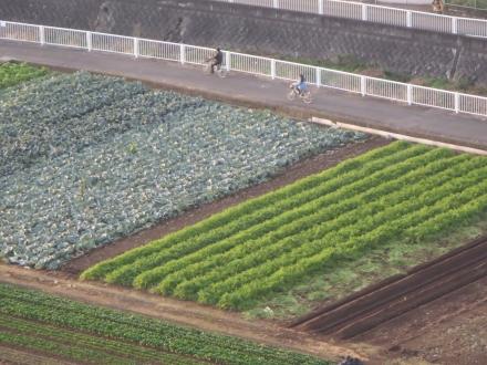 畑と土手、自転車が通る