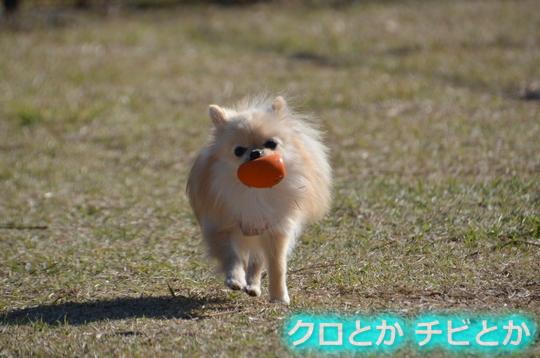 540px20151201_KANON-01 (2)