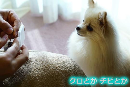 540px2015-11-13_MiTo-005.jpg