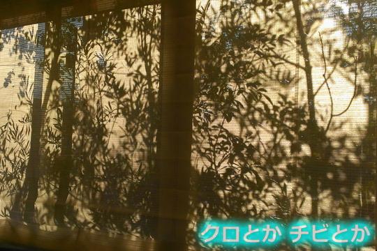 540px2015-11-17_etc-01.jpg