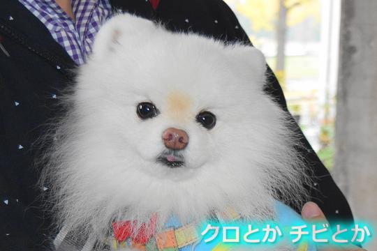540px2015-11-19_YUKIMARU-01.jpg