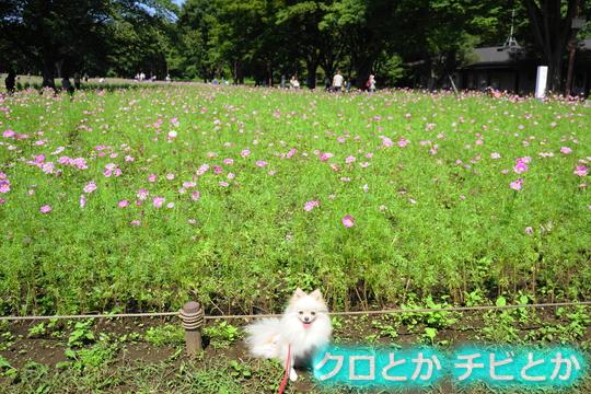540px20150919_MiTo-01.jpg