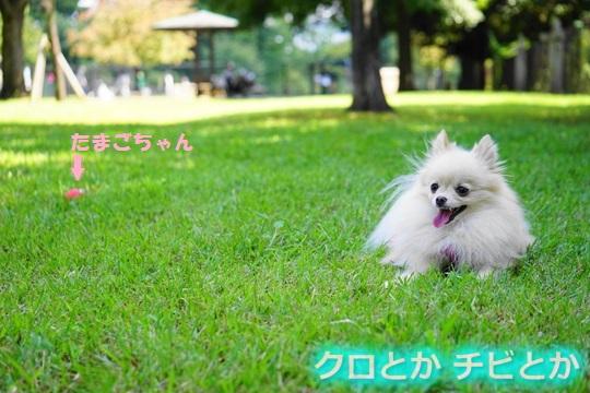 540px20150919_MiTo-06.jpg
