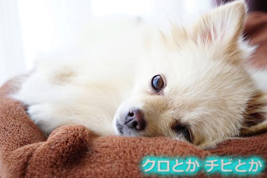 540px20151006_MiTo-03.jpg