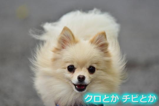 540px20151012_MiTo-01.jpg
