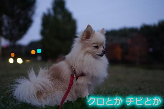 540px20151020_MiTo-01.jpg