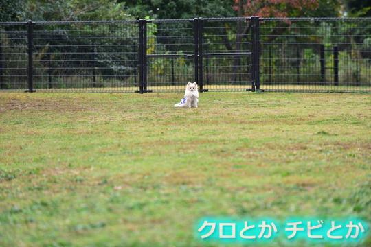 540px20151024_MiTo-01.jpg