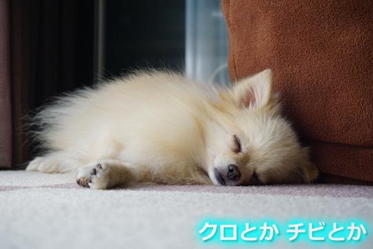 540px20151029_MiTo-01.jpg
