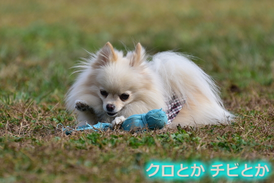 540px20151104_MiTo-01.jpg
