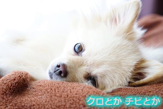 540px20151105_MiTo-01.jpg