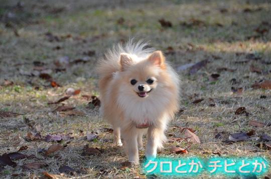 540px20151201_KANON-04.jpg