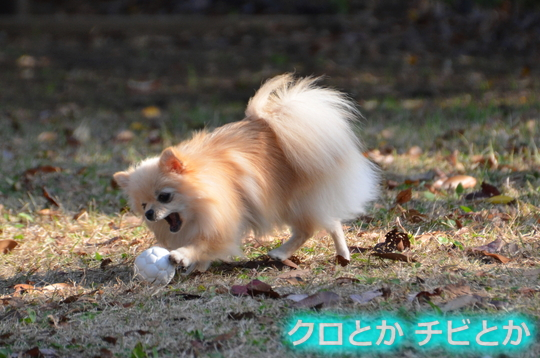 540px20151204_KANON-02.jpg