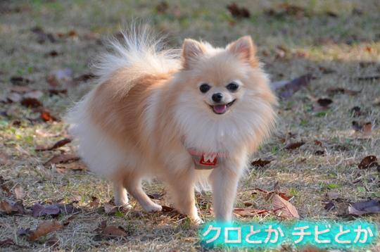 540px20151204_KANON-04.jpg