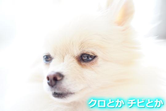 540px20151206_MiTo-01.jpg