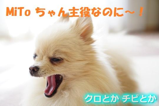 540px20151206_MiTo-03a.jpg