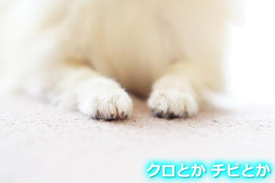 540px20151206_MiTo-04.jpg