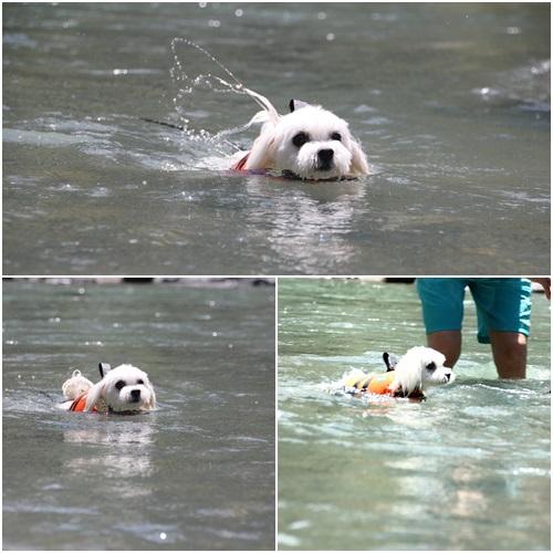泳ぐくっきー