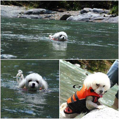 泳ぐこまるちゃん