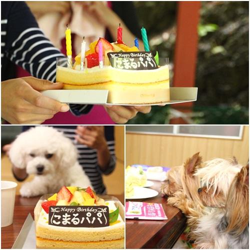 ケーキでお祝い