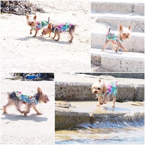浜で遊ぶクルココ