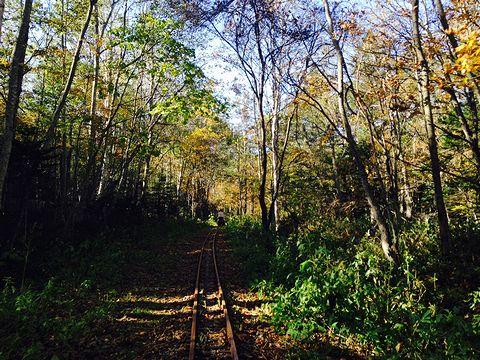 森のトロッコ鉄道エコレール