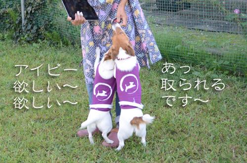 2015-10-04-腕白-059