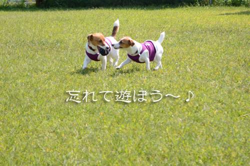 2015-10-04-腕白-039
