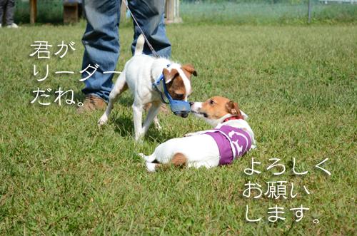 2015-10-04-腕白-012