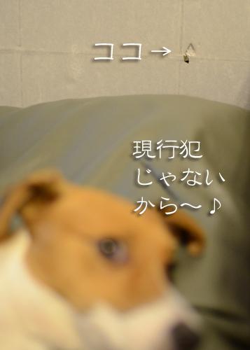 2015-11-10-くるみ日常-012
