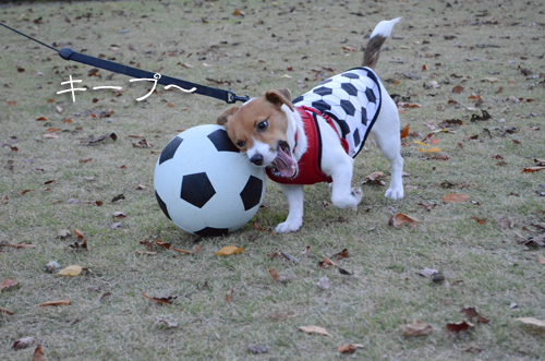 2015-11-15-サッカー-046
