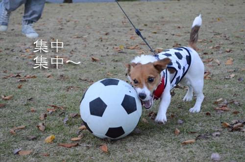 2015-11-15-サッカー-038