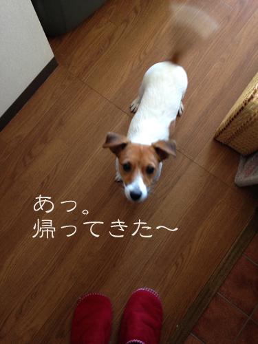 2015-12-08-くるみ-002