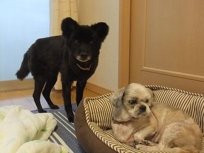 ワタシ小型犬ですよ~!