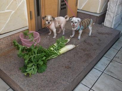 新鮮野菜~♪