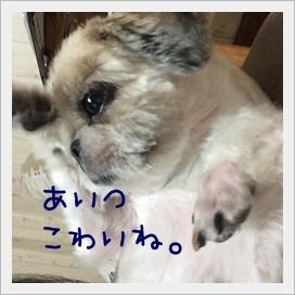 IMG_8442.jpg