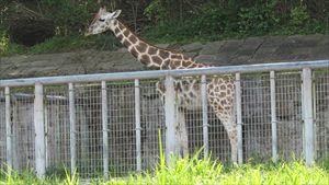 20150922東山動物園 001_R