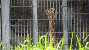 20150922東山動物園 002_R
