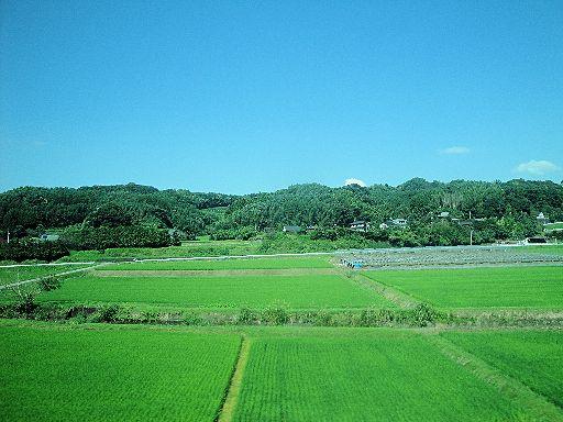 ロアッソ熊本(24)