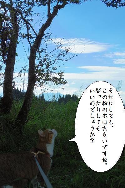 五ヶ所高原12