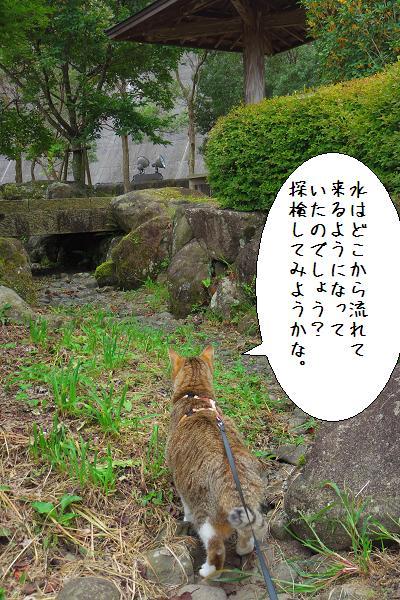 行入ダム4