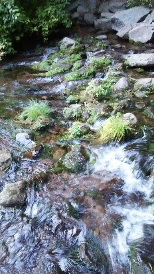 C1サクラメント川の清流
