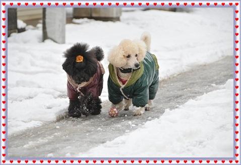 2015.01雪遊び