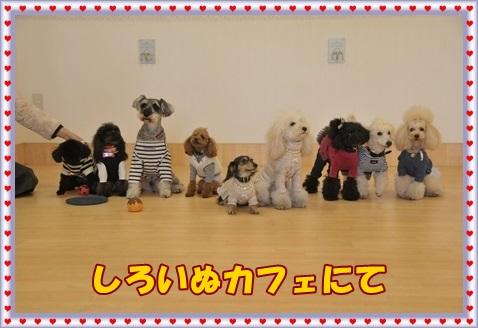2015.02しろいぬカフェ 集合写真